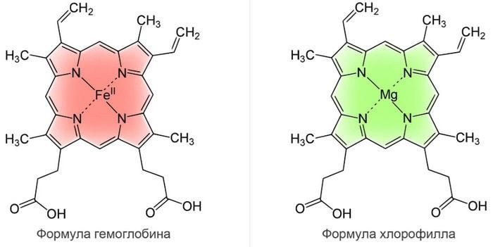 Сходство молекулы хлорофилла и молекулы гемоглобина