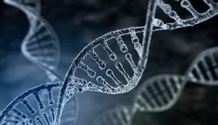 Видовое постоянство числа хромосом