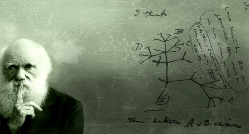 Учение Дарвина о искусственном отборе