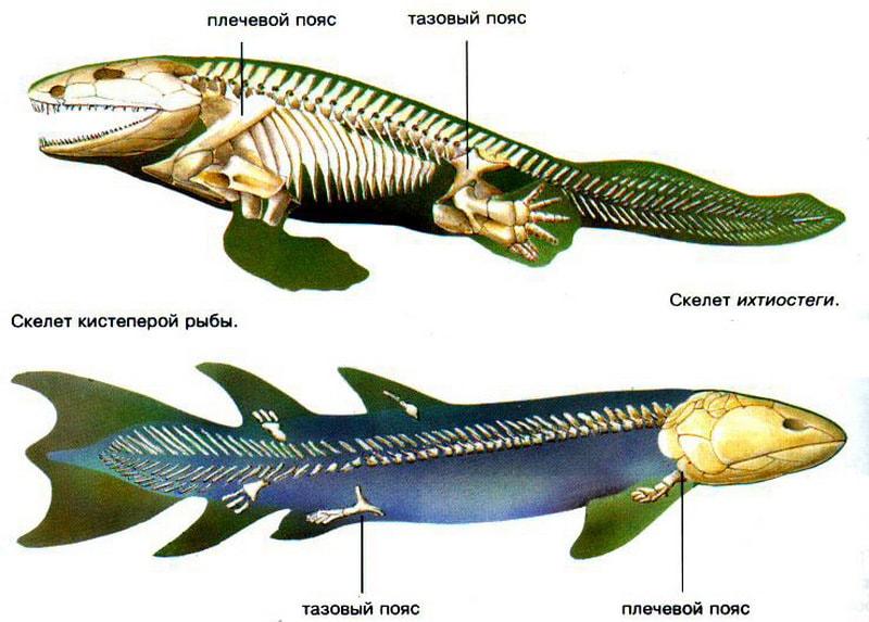 Кистеперая рыба и ее переходная форма