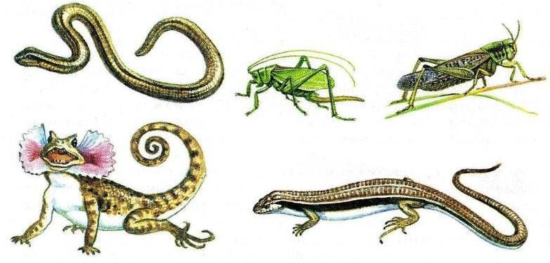 Представители пойкилотермных (холоднокровных) организмов