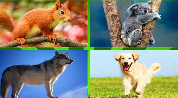 Представители гомойотермных (теплокровных) животных