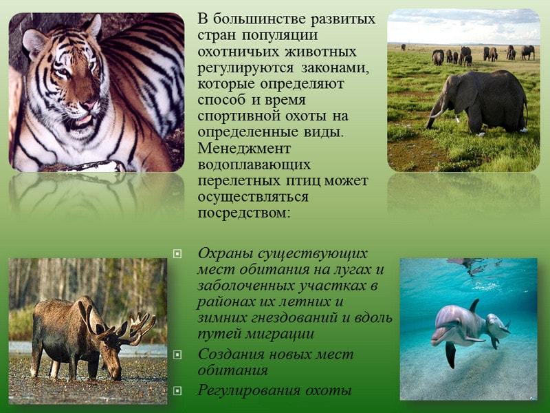 Законодательные меры охраны природы