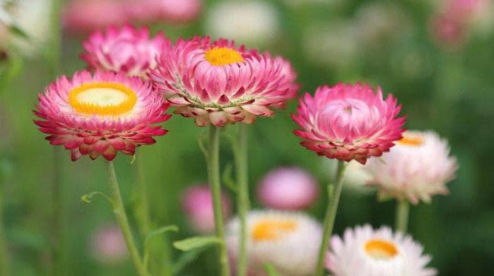 Цветок растения