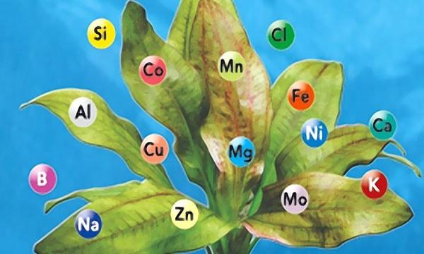 Минеральные соли, необходимые растению