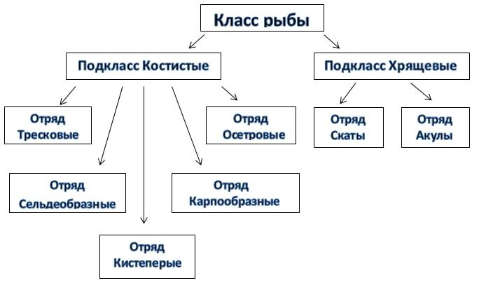 Классификация рыб