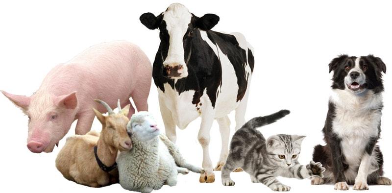 Первые домашние животные