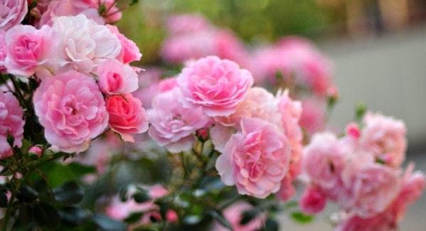 Покрытосеменные или цветковые растения