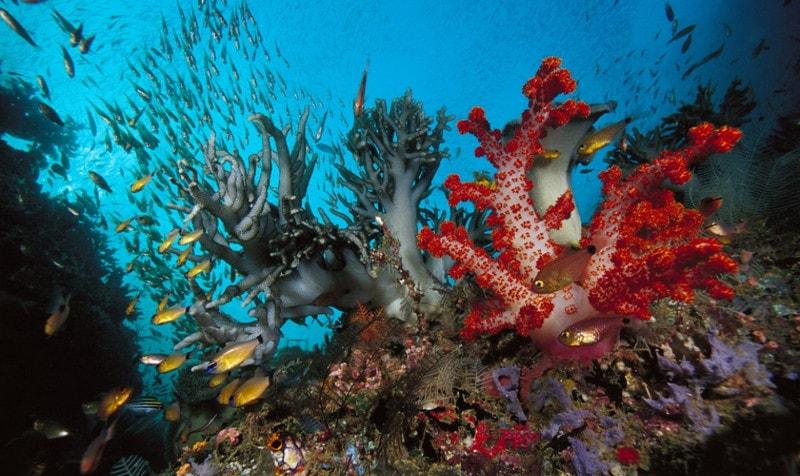 Коралловые полипы общая характеристика
