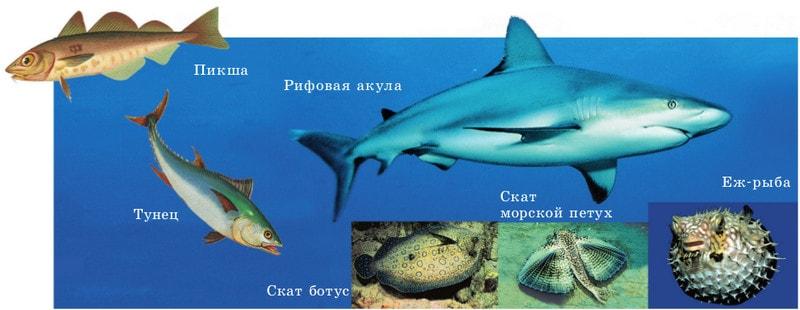 Представители класса рыб