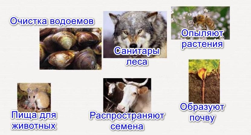 Значение животных в природе