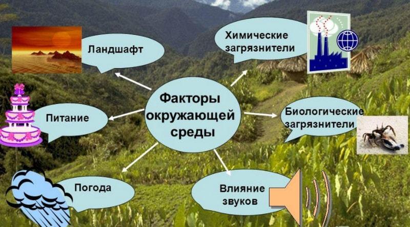 Влияние окружающей среды на здоровье человека