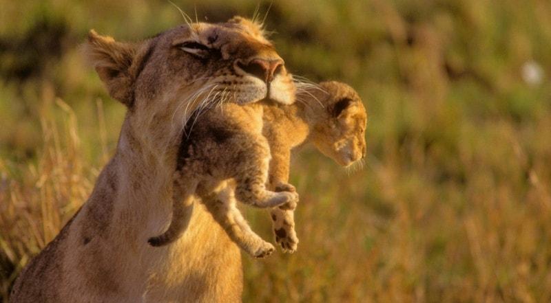 Забота о потомстве у млекопитающих