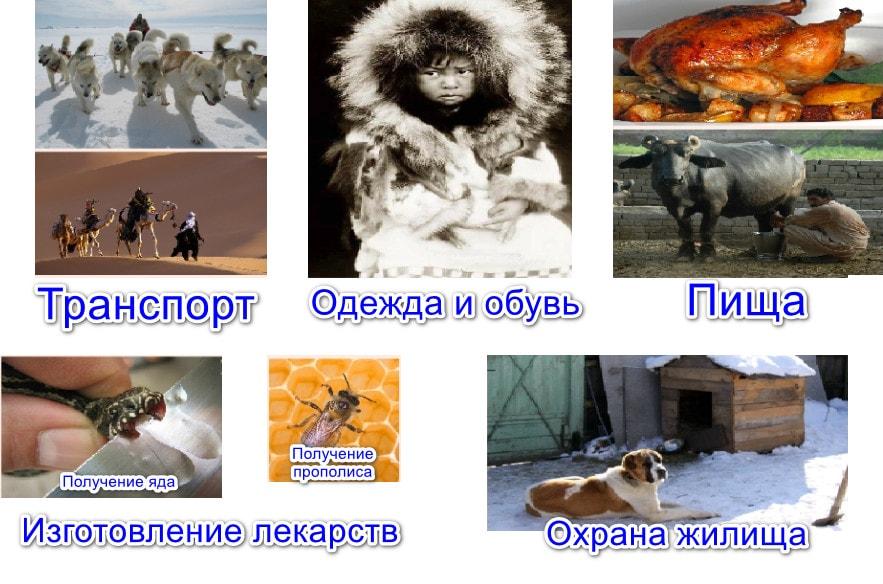 Реферат значение млекопитающих в природе и жизни человека 668