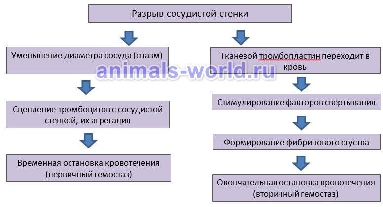 Схема свертывания крови