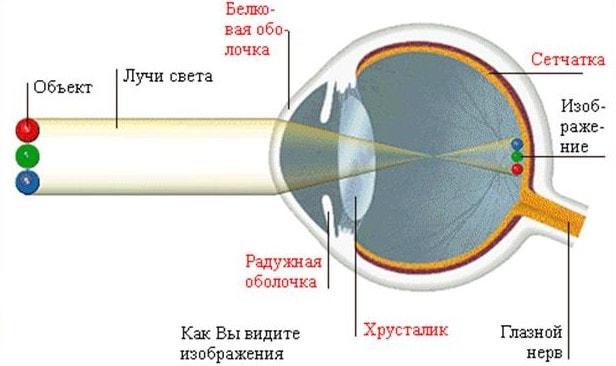 Порядок прохождения света через глаз