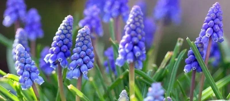 соцветия растений