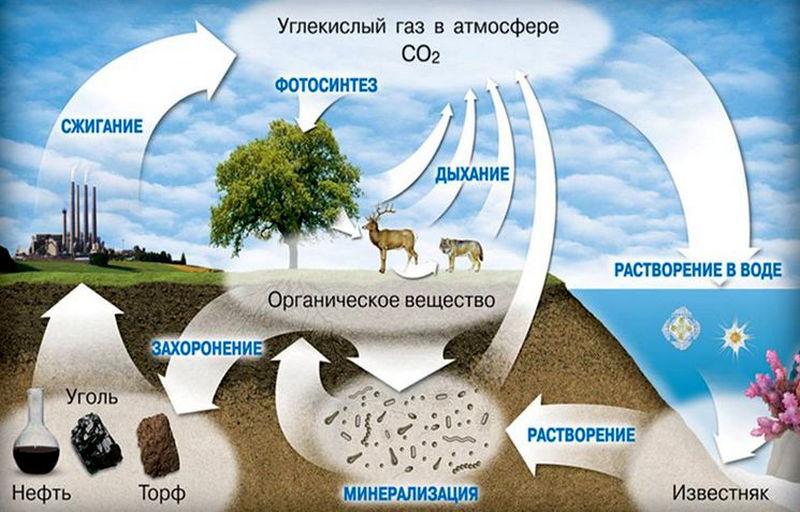 Биохимический круговорот в биосфере