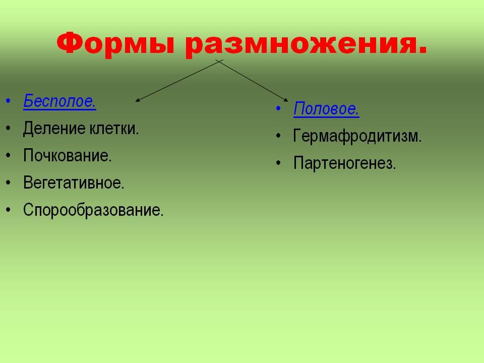 Формы размножения организмов: