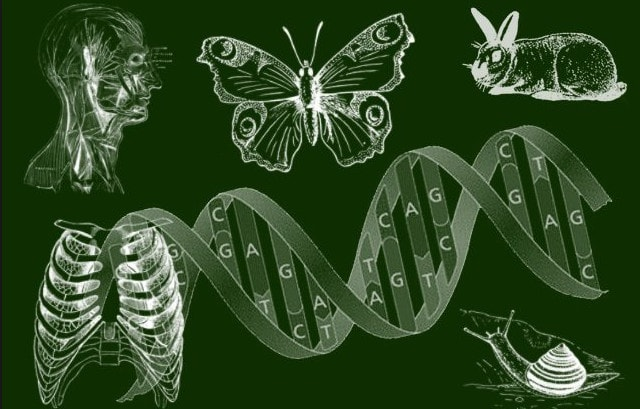 Биология - наука о жизни