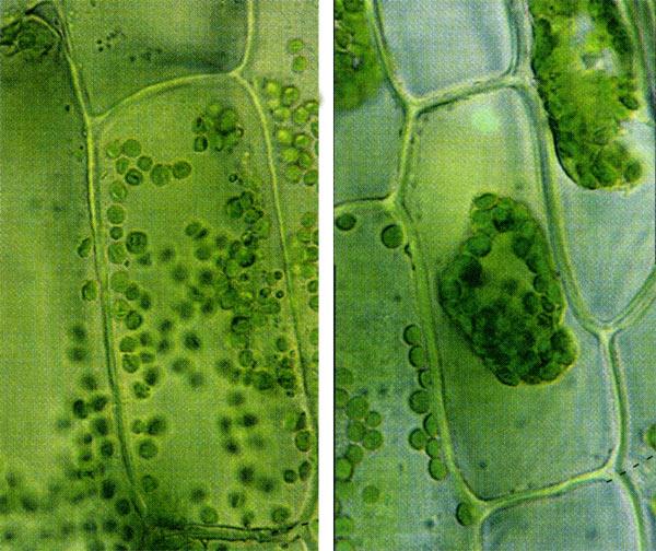 Строение клетки наружная клеточная