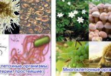 Примеры одноклеточных и многоклеточных организмов