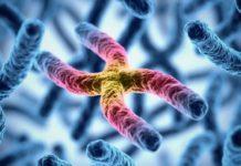 Что является основой хромосом?