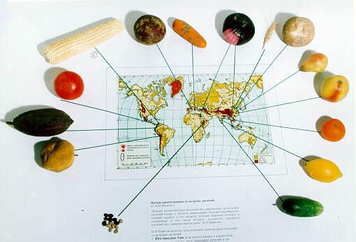 многообразия и происхождения культурных растений  Центры многообразия и происхождения культурных растений