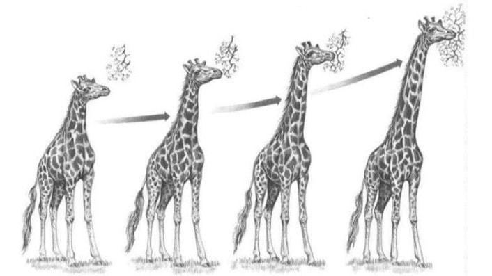 Факторы эволюции по Ламарку
