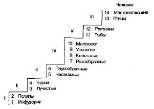 Факторы эволюции по Ламарку.