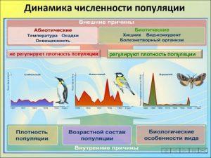 Популяция — форма существования вида.