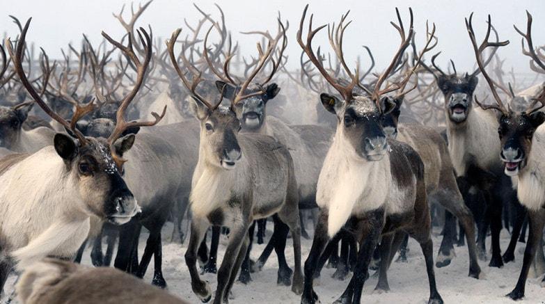 Они имеют одних предков, геном, и находятся в некой изоляции от иных популяций вида