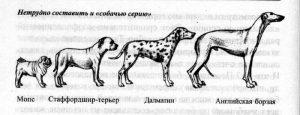 Селекция животных.