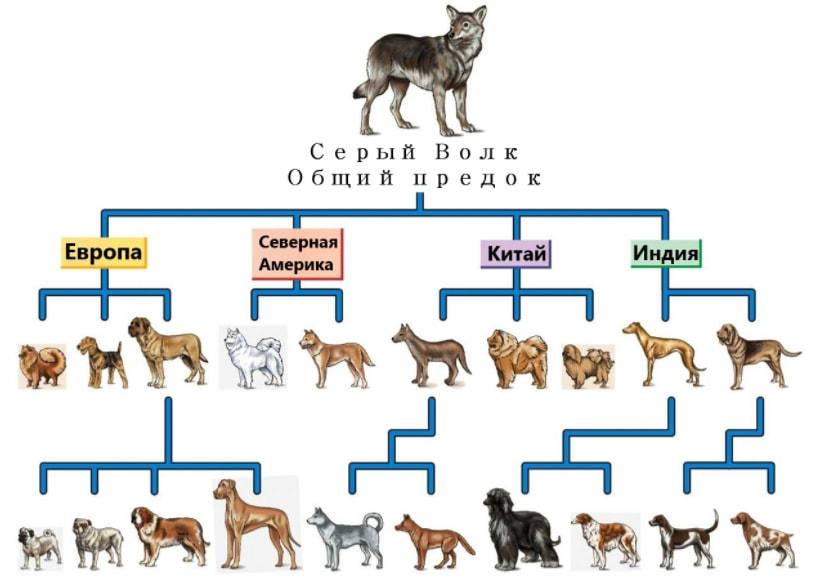 Происхождение собак от общего предка