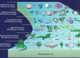 Развитие жизни в палеозойскую эру