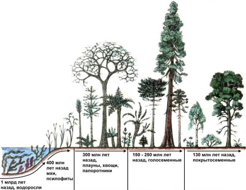 Ароморфоз растений
