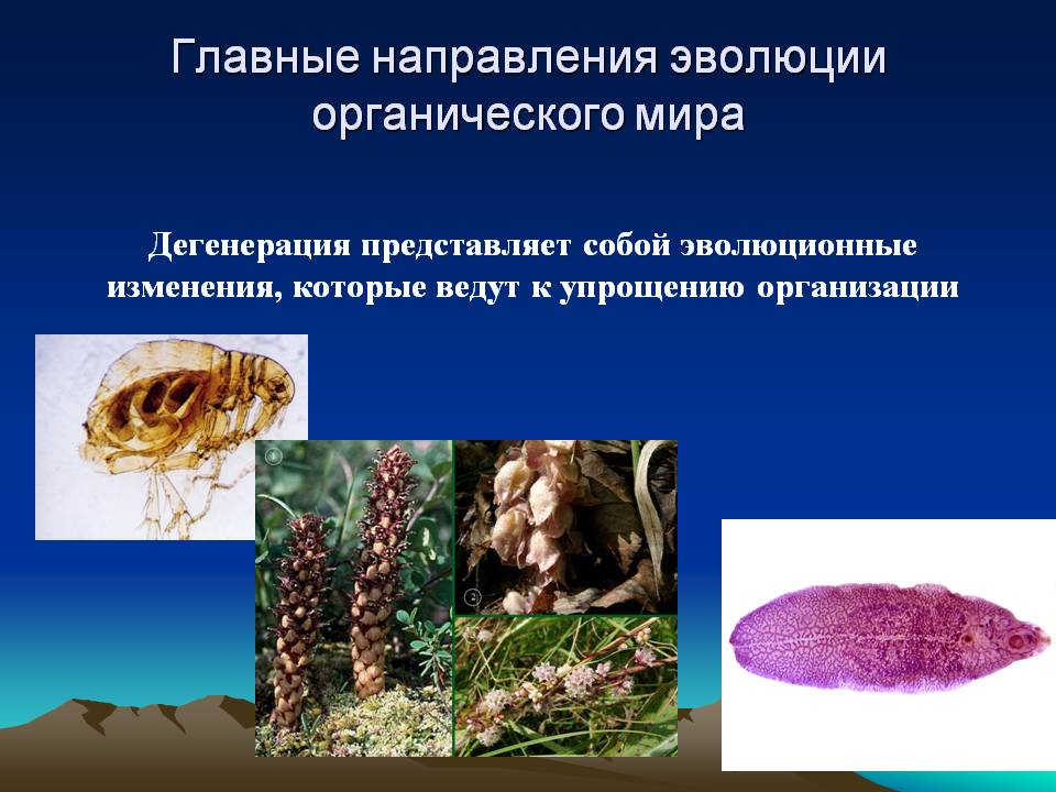 Главные направления органической эволюции.