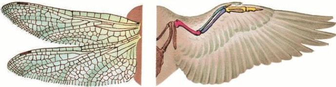 Пример аналогичных органов
