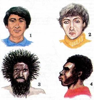 Человеческие расы, единство их происхождения.