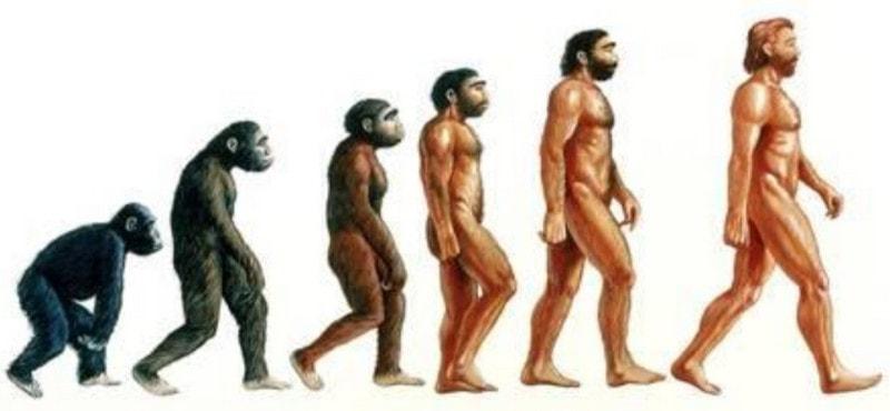 Теория Дарвина о происхождении человека
