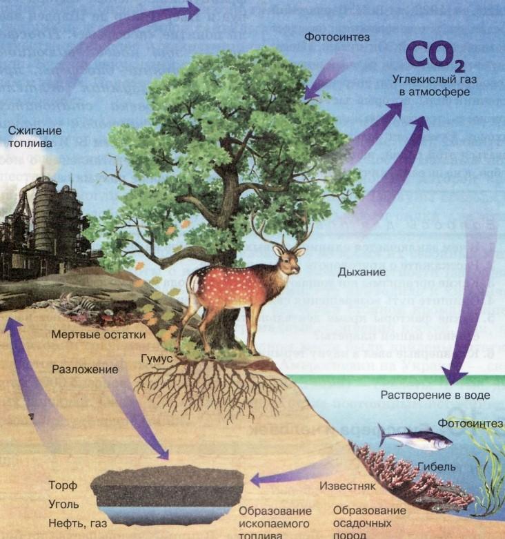 Биогеохимические процессы в биосфере, связанные с деятельностью человека