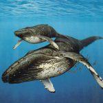 Биомасса Мирового океана