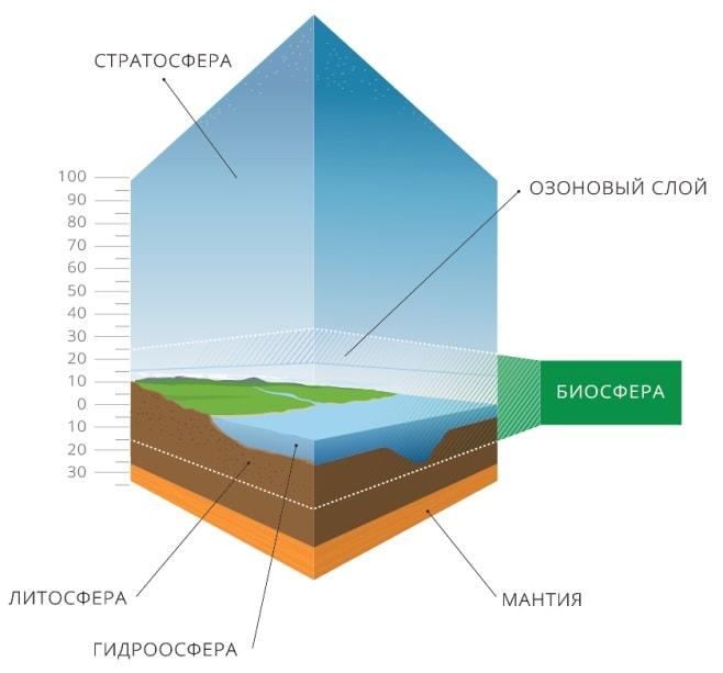Где проходят границы биосферы