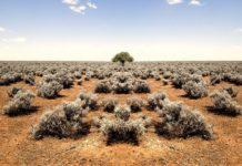 Ксерофиты - растения, которые приспособились к жизни в условиях засухи