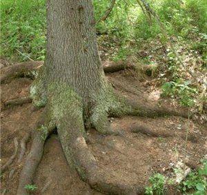 Поглощение корнями воды и минеральных веществ