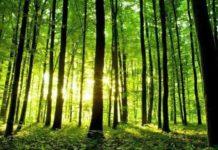 Смена биогеоценоза с примерами