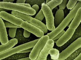 Автотрофные бактерии