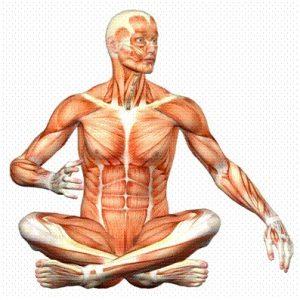 Что такое анатомия и физиология