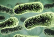 Бактерии паразиты