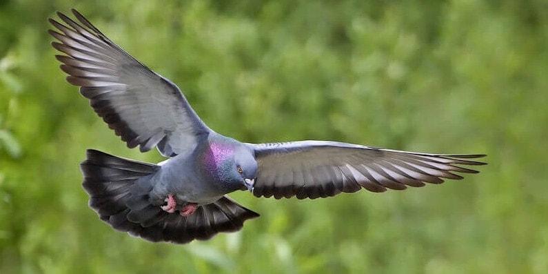 Класс птицы - общая характеристика